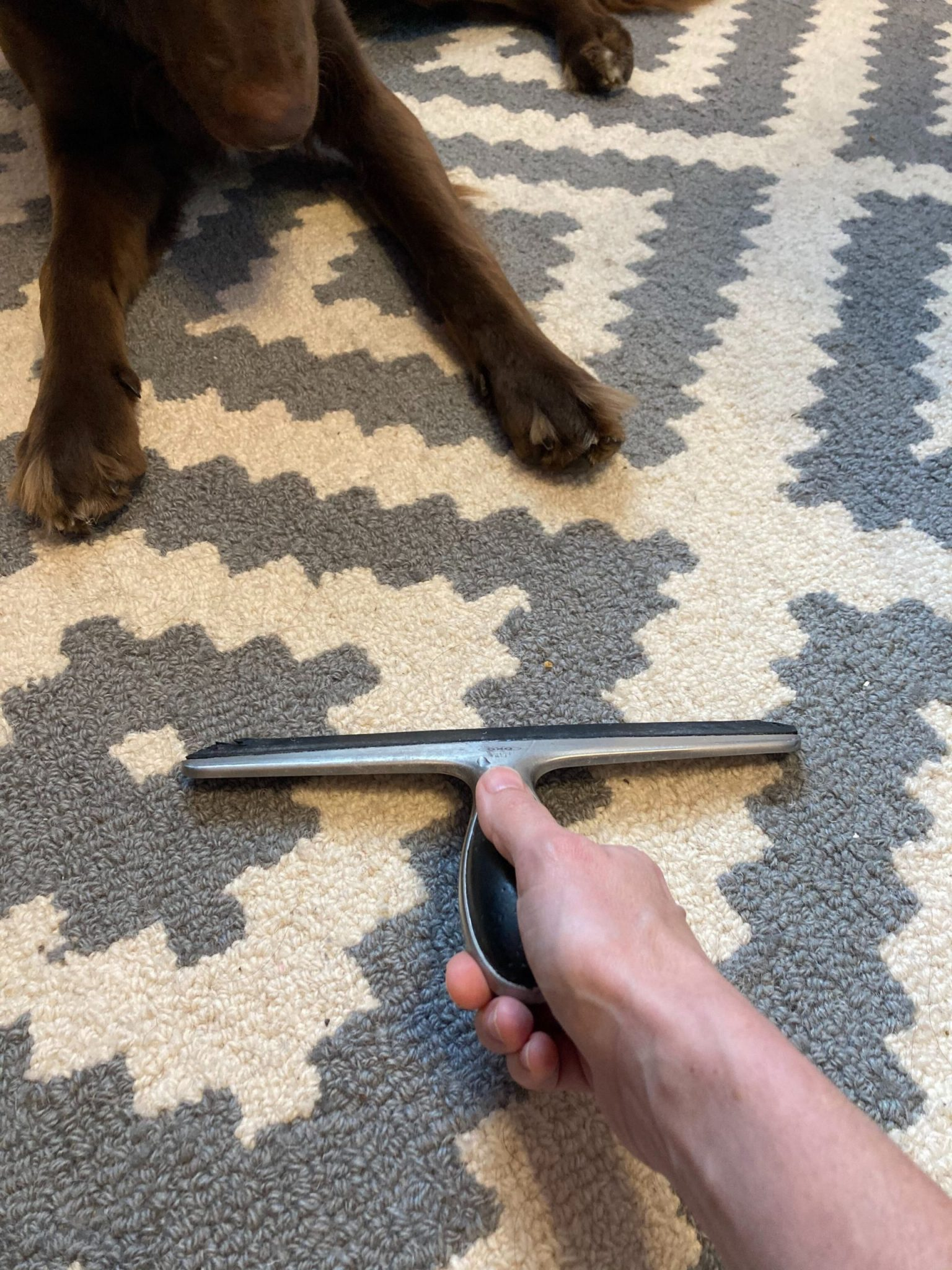 Remove Unwanted Pet Hair Using A Squeegee
